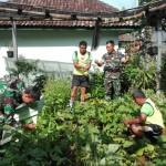 Kodim Bangli Panen Kacang Buncis, Memanfaatkan Lahan Kosong