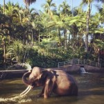 Mason Adventure Elephant Park Bali Menjadi Pioner Wisata Alam