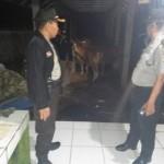 Dinas Peternakan Gandeng Polda Bali Untuk Awasi Rumah Potong Hewan